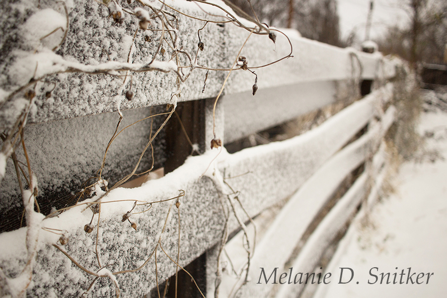 Frozen Beauty in the Backyard by Melanie D. Snitker