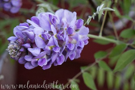 Spring in Texas: Backyard Beauty by Melanie D. Snitker