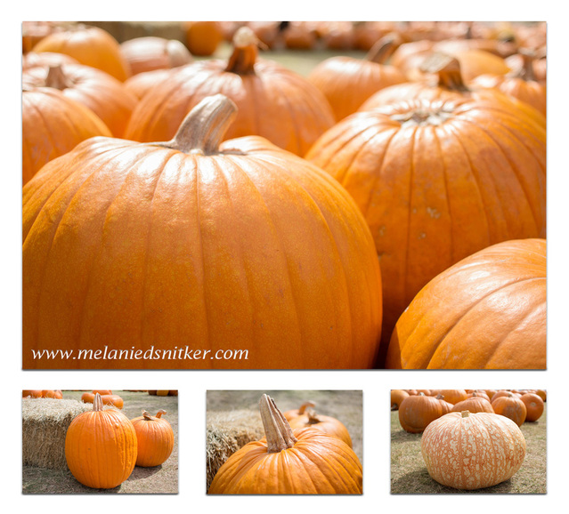 Fall Pumpkin Beauty by Melanie D. Snitker